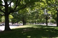 Looking down the median of Monument Avenue, by Thomas Roberts